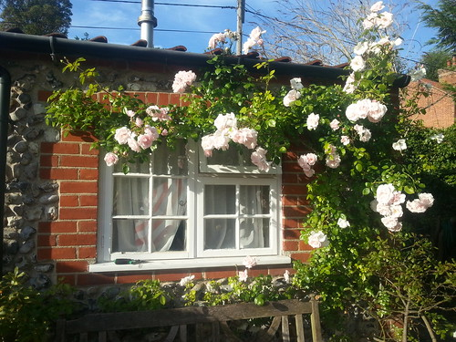 Norfolk cottage roses
