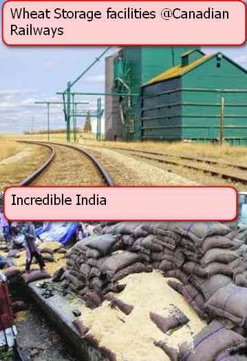 wheat canada vs india