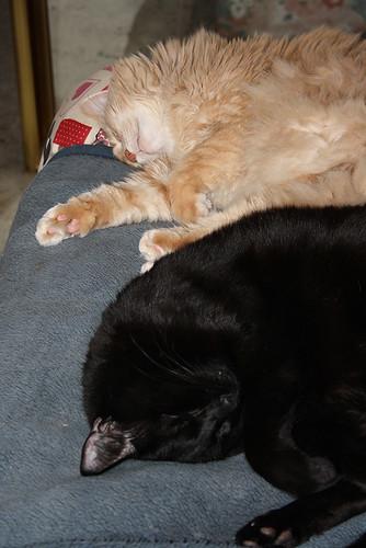 My Two Sleeping Babe's ~ Champaz & Blacky..