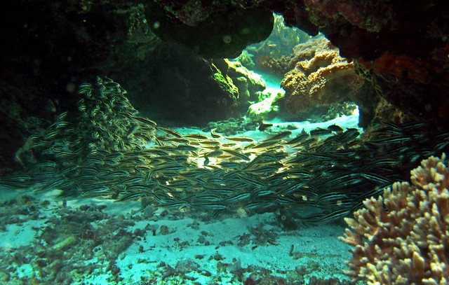 Invasión de peces rayados