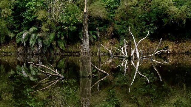 Sulky Creek, Taylorville, West Coast