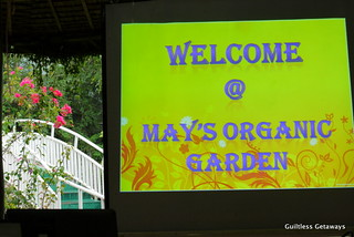 mays-organic-garden.jpg