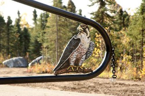 falcons ridge