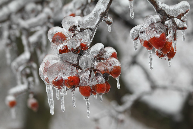 Iced Berries
