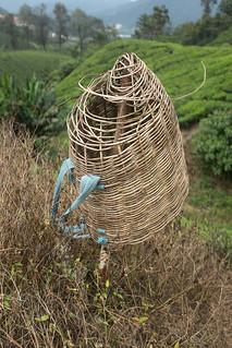 Tea Picker's Basket