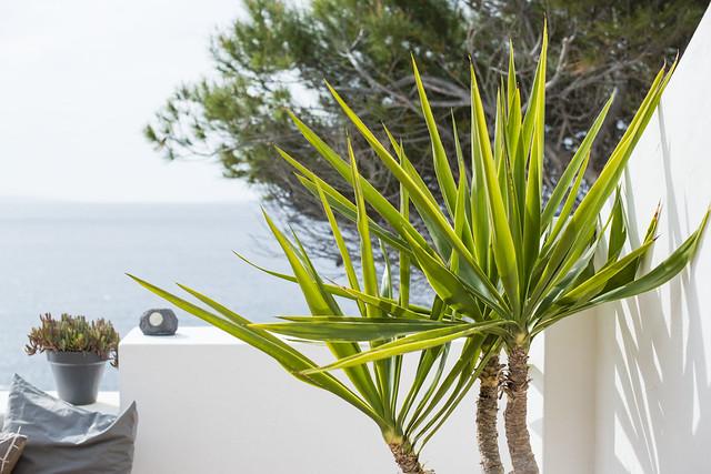 Ibiza living: Mauricio & Bradley, Coco Safari 11