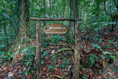 park wood tree green sign forest rainforest post conservation jungle srilanka sinharaja serendip southernprovince