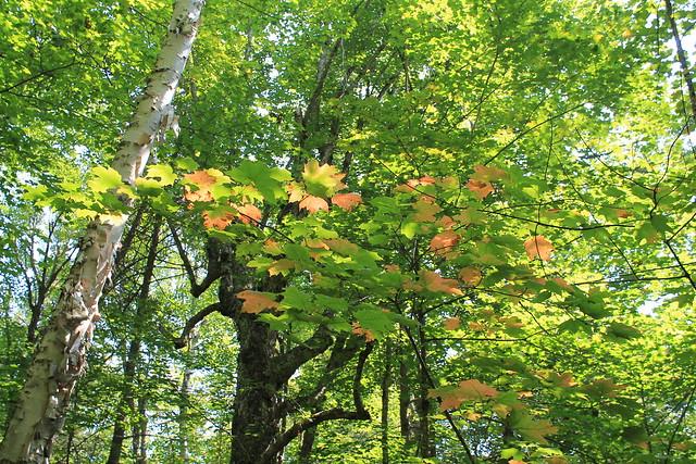 Mississagi Provincial Park, Ontario - Taken at Mississagi Provincial Park, in Elliot Lake, ON.