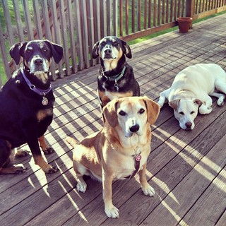 Happy Mothers Day to all of the furkid Moms! #dogstagram #furkids #dogmom #ilovemydogs