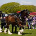 Southsea - Castle Field - Rural & Seaside Show - 22