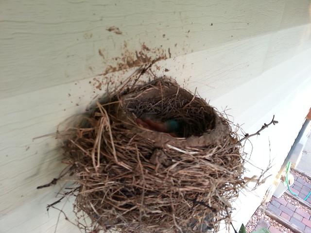 Mother Robin took a brief break.