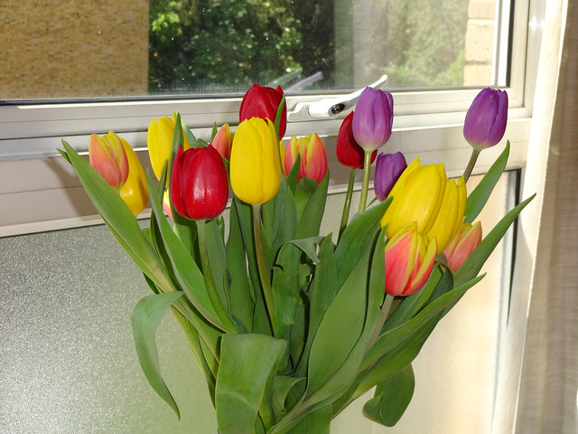 Tulips today