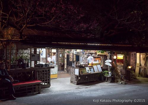 今帰仁グスク桜まつり | Okinawa #09