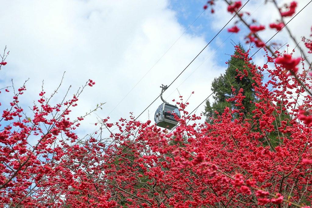 九族櫻花祭 (172)