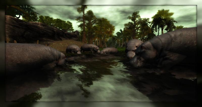 Hippopotamus at Makeahla Jungle