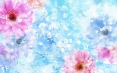 flower_background_images_tumblr