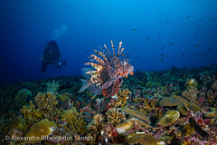 Photographer and the lion-fish