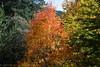 Valle Fuenfría - otoño 1