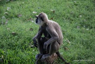Sri Lanka. Anuradhapura.