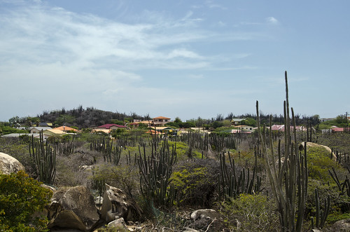 Cacti and Houses
