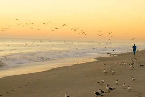 ocean seagulls beach birds sunrise dawn surf florida jogging jog jogger indialantic