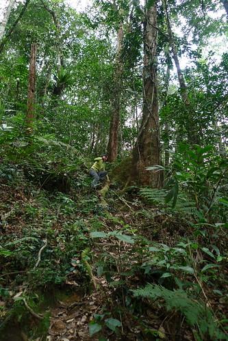 Tanah Rata, Cameron Highlands, Malaysia