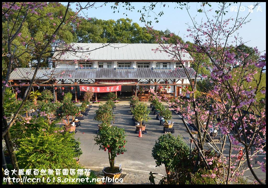 台大鳳凰自然教育園區櫻花DSC_5892