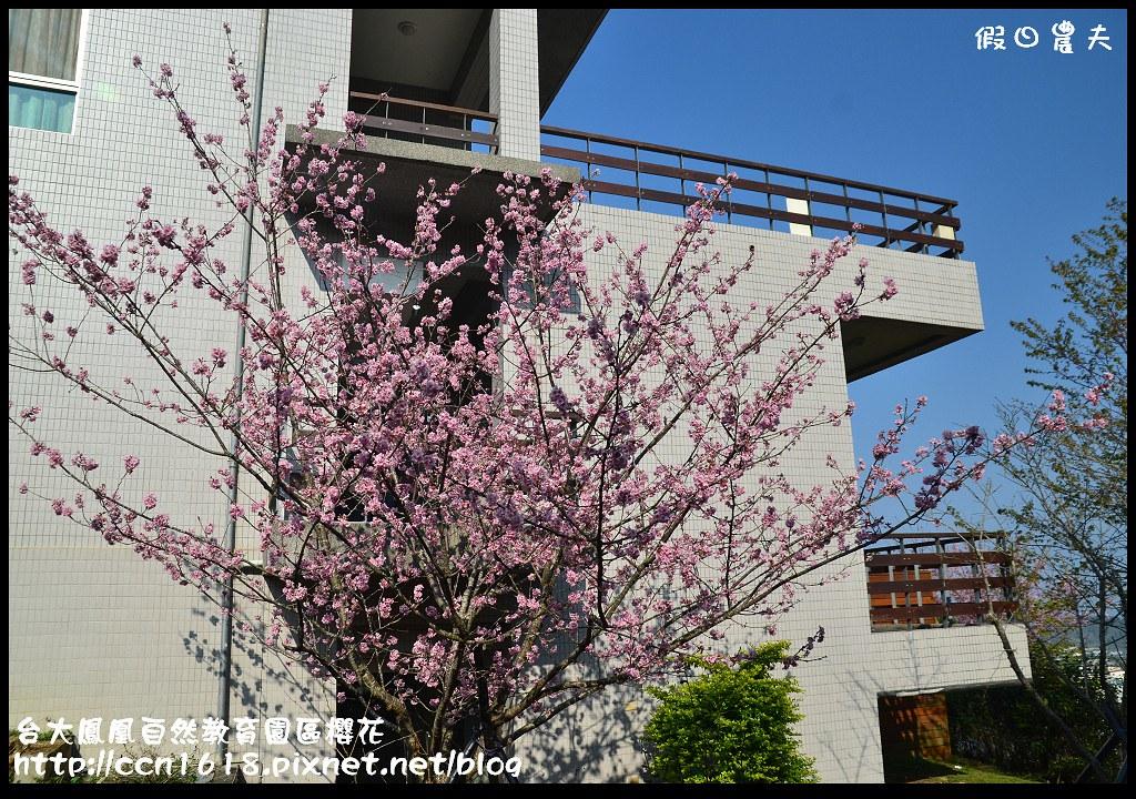 台大鳳凰自然教育園區櫻花DSC_6132
