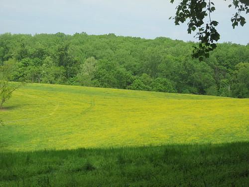 green yellow hiking trails maryland wildflowers candocanal montgomerycounty blockhousepoint calitheafarm