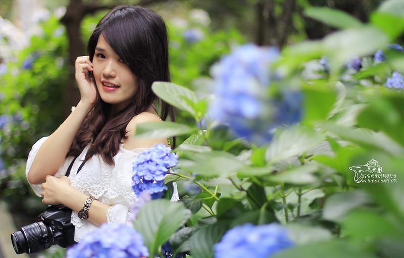 繡球花 (24)