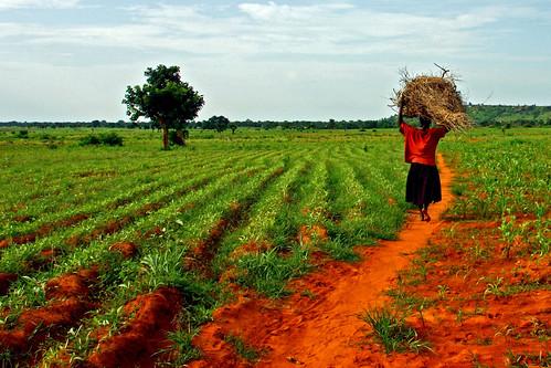 femme travail togo afrique