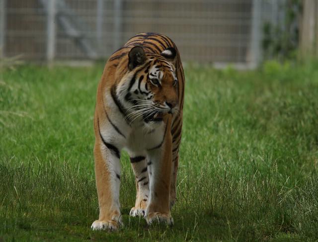 Yorkshire Wildlife Park 21.06.16 216