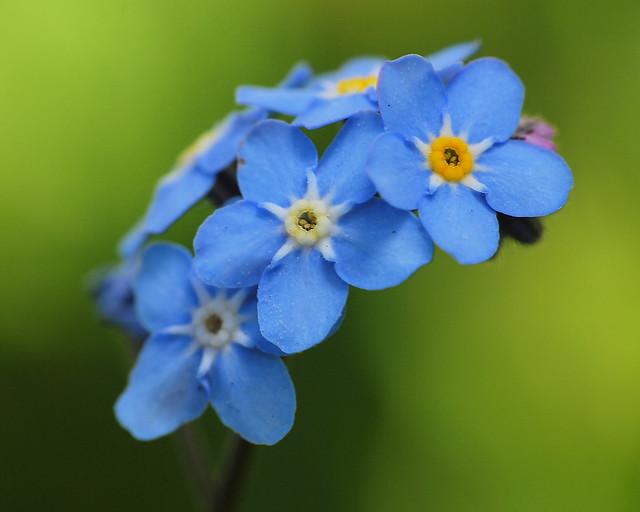Garden Flower 2 20120502