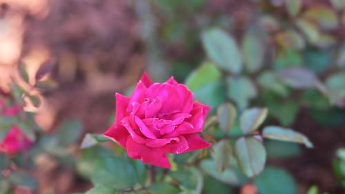 IMAGE: http://farm8.staticflickr.com/7448/8720978780_38fca1d0b5.jpg