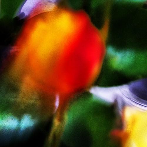 y ... una pequeña rosa by eMecHe