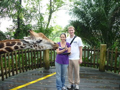 Kristen and Ryan feeding a giraffe