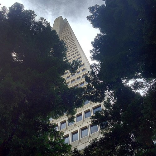 Transamerica Tower from the Redwood Forest Park below #sanfrancisco by @MySoDotCom