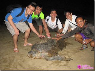 9251980161 ce043a41ed n Sukamade Trip   Finding turtles and release its babies to beach   part 2
