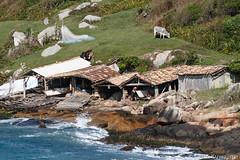 Rancho de Pesca na Praia do Rosa, Santa Catarina