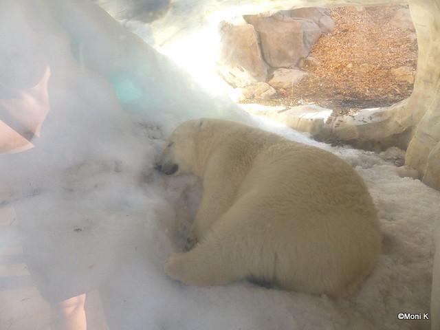 68-heute Nacht schläft Flocke in der Eisgrotte