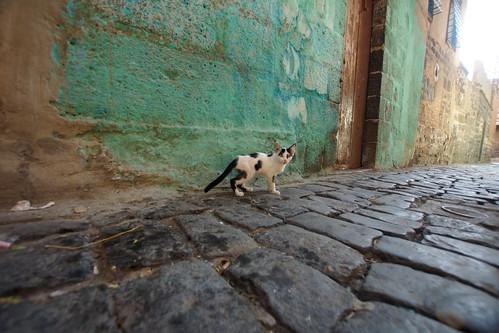 Two cats of Diyarbakir by CharlesFred