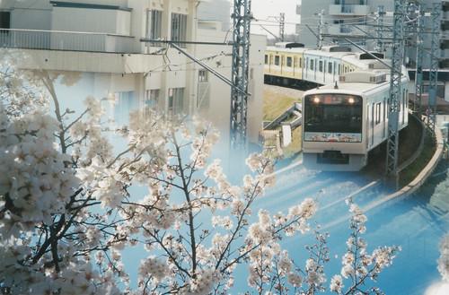 桜とFトレ