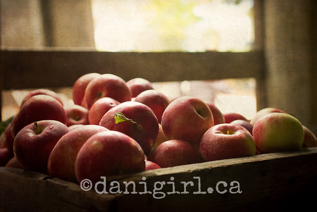 Apple photograph