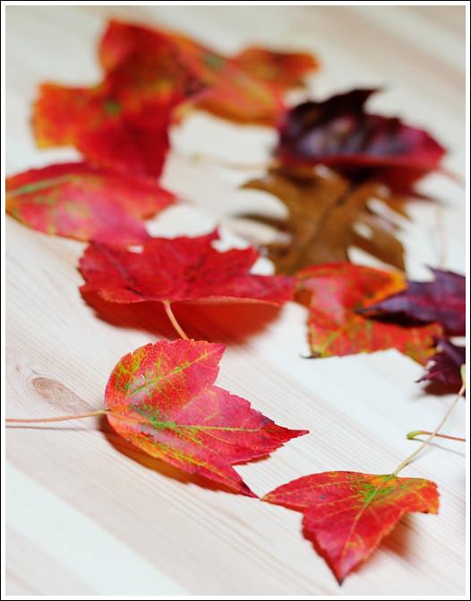 Leaf Edition 2