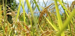 海稻米的願望劇照。(圖片來源:林務局)