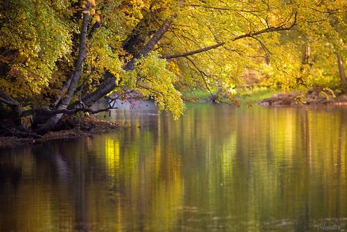 autumn reflections river nikon colours jyrki kotka d600 kymi salmi langinkoski mygearandme mygearandmepremium mygearandmebronze mygearandmesilver