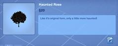 Haunted Rose