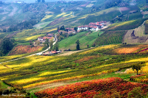 vineyards by anbri22