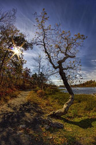 autumn nj fisheye fallfoliage flare 8mm autumnalcolor gnarlytree highpointstatepark 8mmfisheye lakemarcia canon550d bower8mmfisheye canoneosrebelt2i