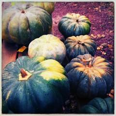 Ferme d'Orgères #fall #farming - Photo of Saulnières